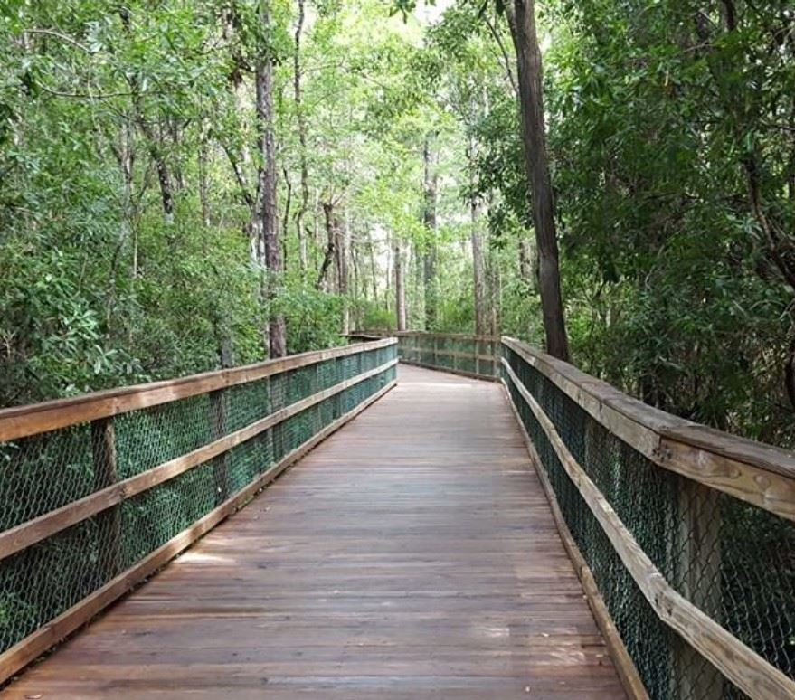 Image of a boardwalk leading through the forest